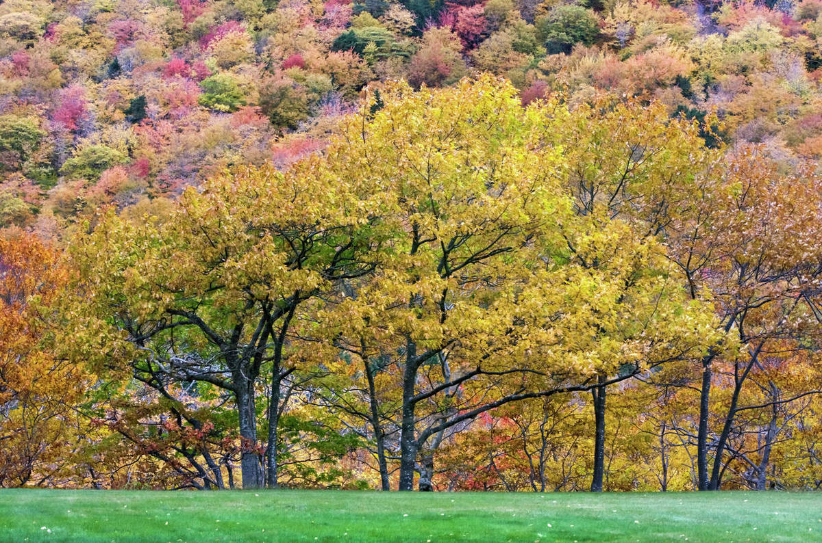 Beautiful Natural Scenery With Trees And Forest In Autumn Nova