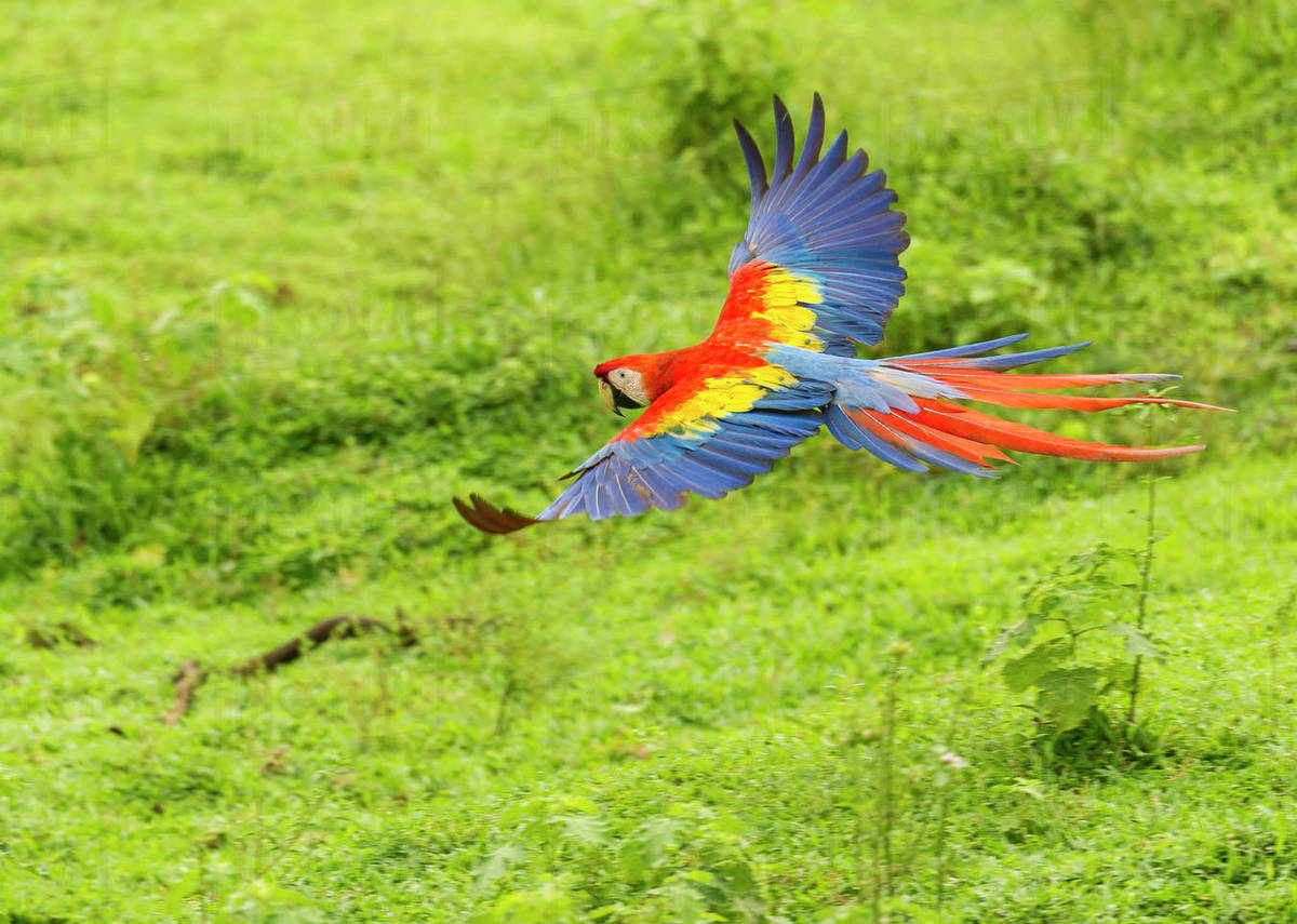Image result for macaw parrots