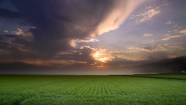 Dramatic light at rice paddy, Hokkaido, Japan Royalty-free stock video