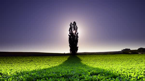 Lone tree, Hokkaido, Japan Royalty-free stock video