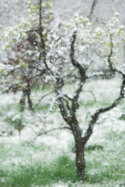Tree seen through snow-speckled window Royalty-free stock photo