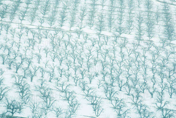 Switzerland, snow-covered orchards, full frame Royalty-free stock photo