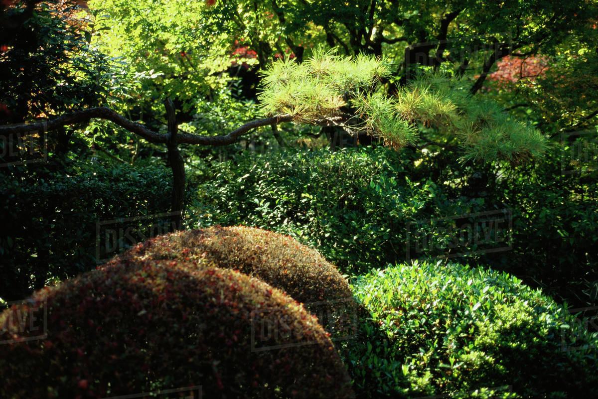 Merveilleux Trees And Shrubs In Japanese Garden