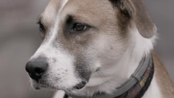 Close-up shot of a mixed breed dog Royalty-free stock video