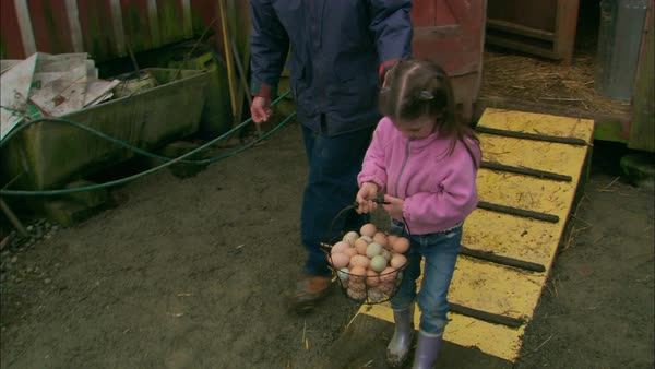 Montage of a family with freshly gathered eggs on a farm Rights-managed stock video