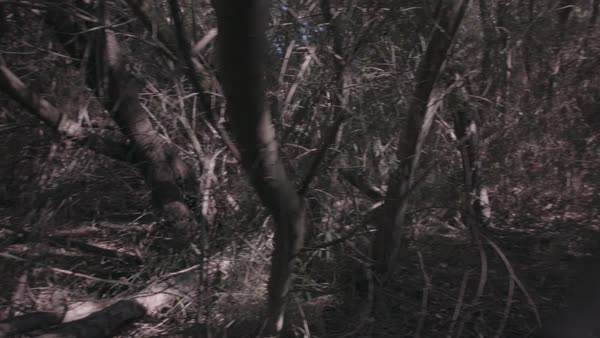 Hand-held shot of a person walking through a muddy forest Rights-managed stock video