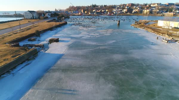 Stunning flocks of geese take flight from icy harbor, slow motion aerial view. Royalty-free stock video