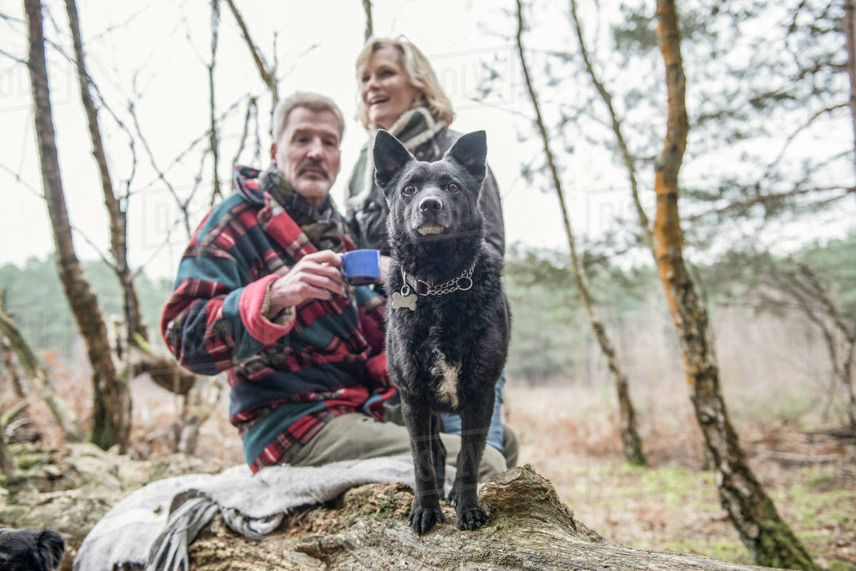 Senior couple enjoying a break with their dog during a woodland walk Royalty-free stock photo
