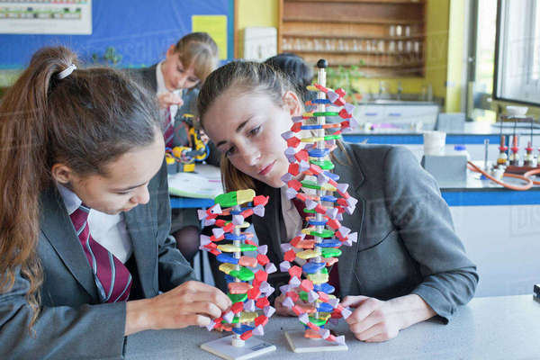High school students assembling helix DNA model in science class Royalty-free stock photo