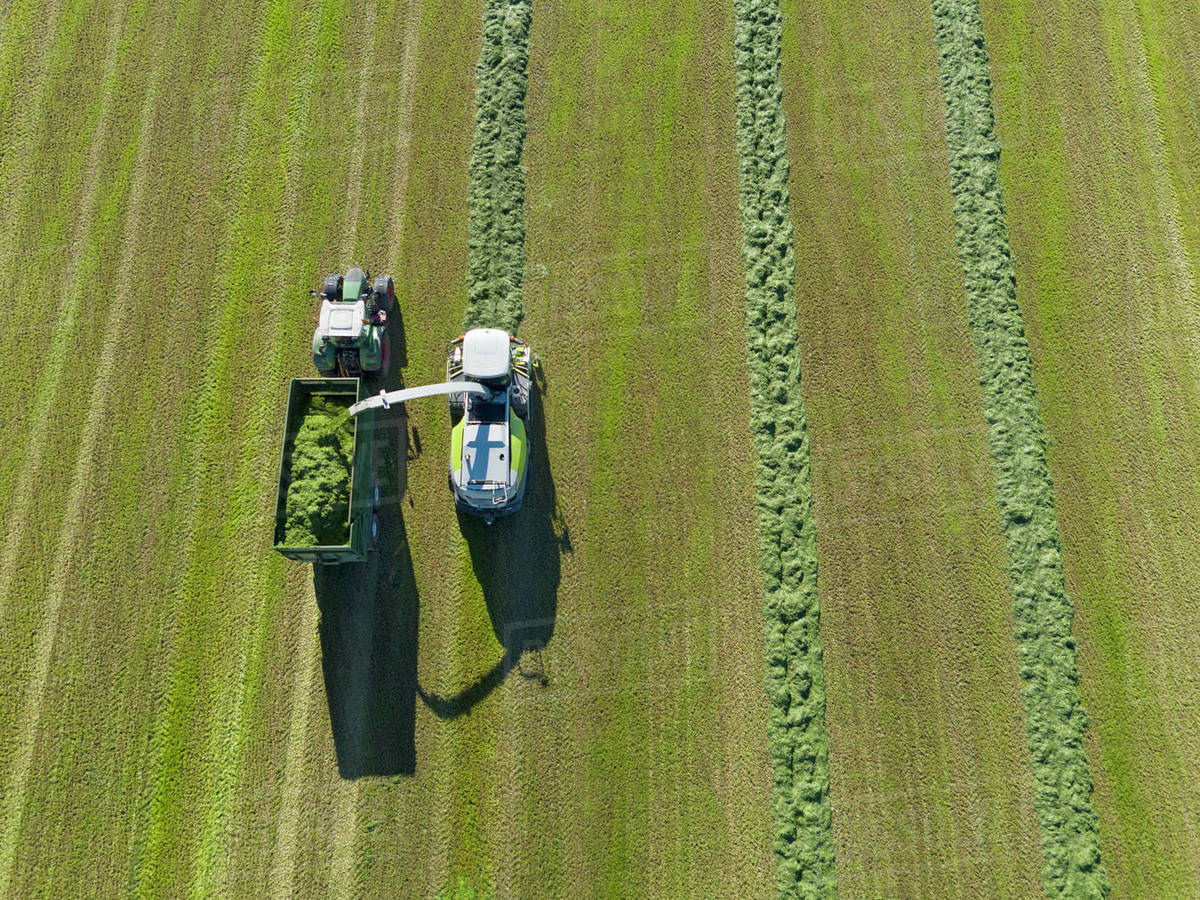 grass field aerial. Aerial View Of Forage Harvester Cutting Grass Silage Crop In Field And Filling Tractor Trailer