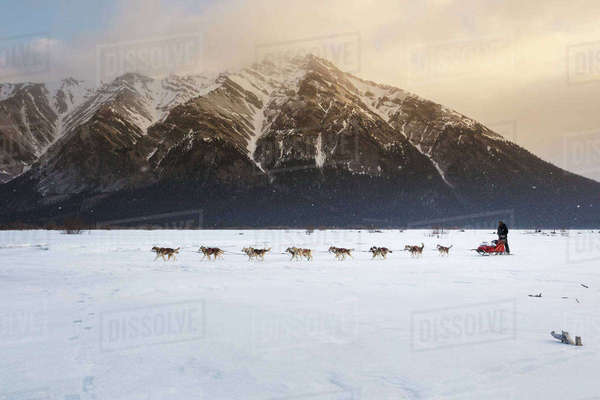Mike Ellis runs on the South Fork of the Kuskokwim as he leaves Rohn during the 2014 Iditarod Rights-managed stock photo