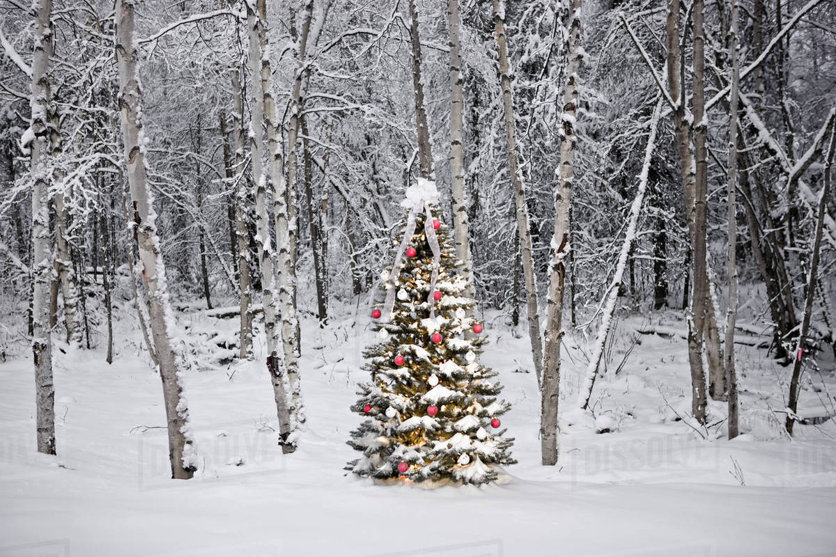 decorated christmas tree in front of a snow covered birch forest alaska