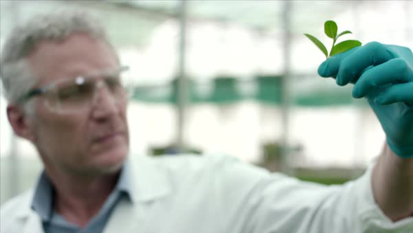Botanist analysing leaf at greenhouse. Royalty-free stock video