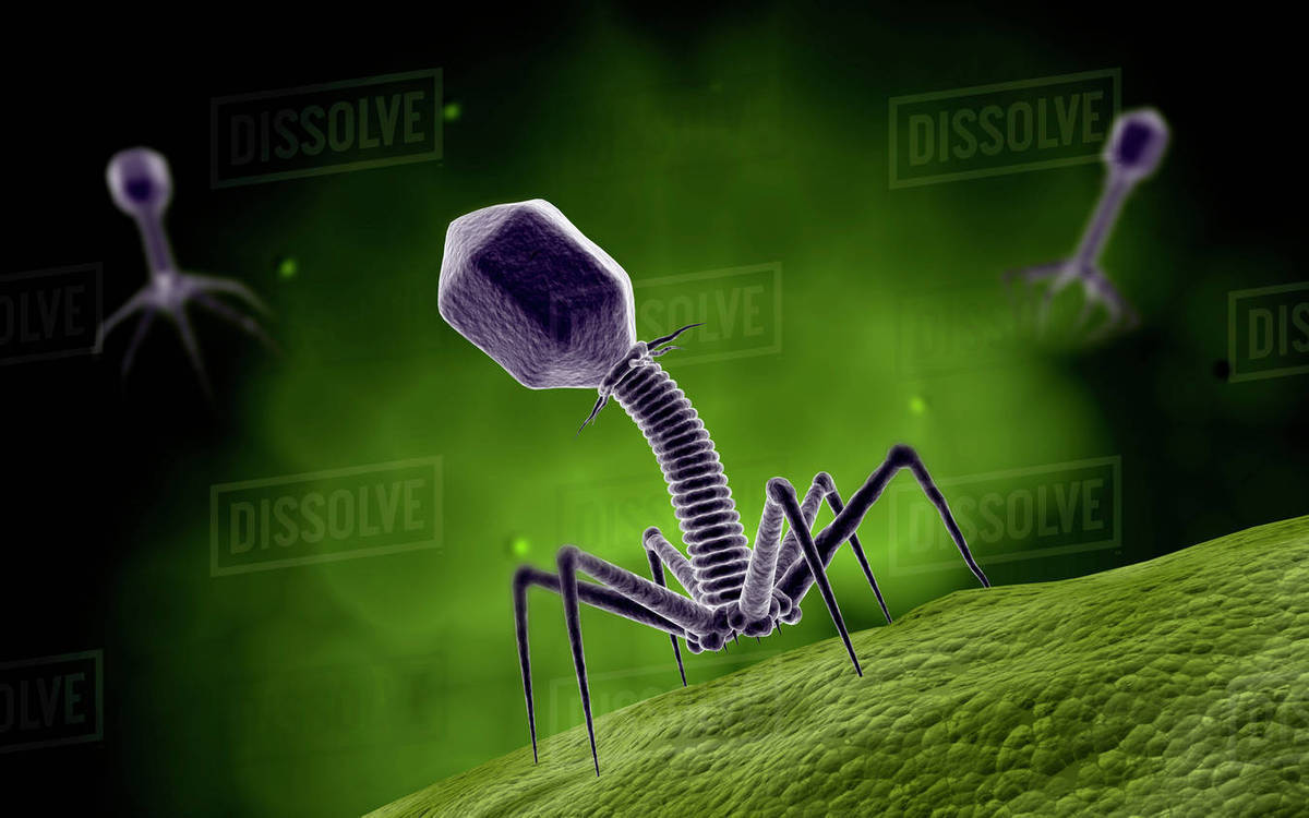 Microscopic view of bacteriophage. Royalty-free stock photo