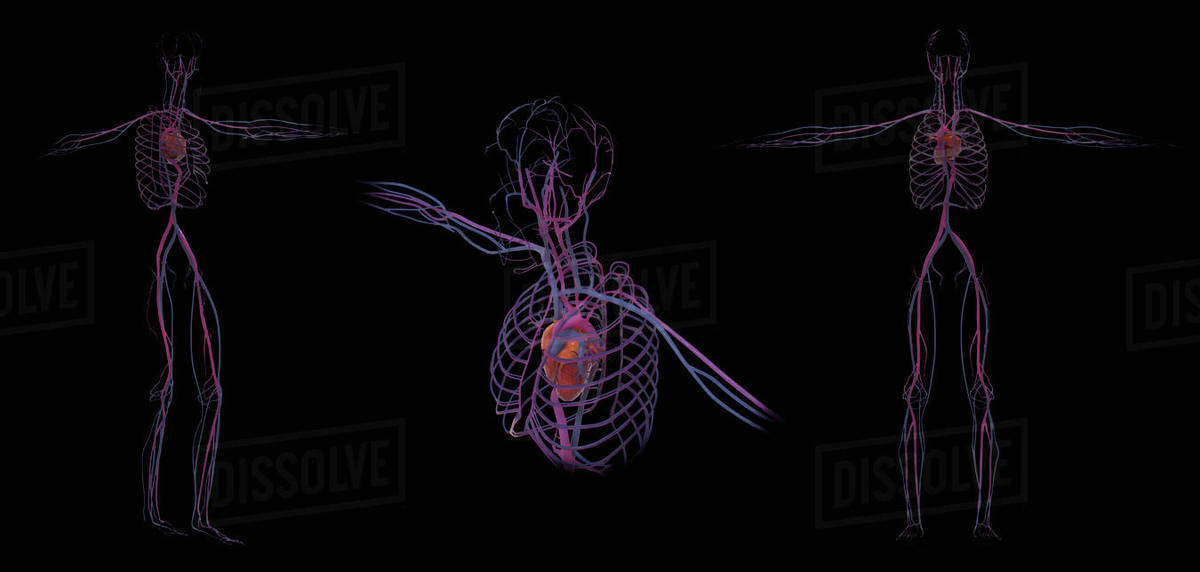 3D rendering of human skeletal system, rear view  stock photo
