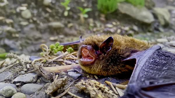 Close-up shot of a bat lying on the ground Royalty-free stock video