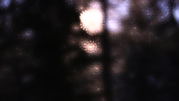 Out of focus of a forest through a window Royalty-free stock video