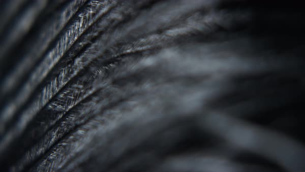 Macro shot of artificial feathers Royalty-free stock video