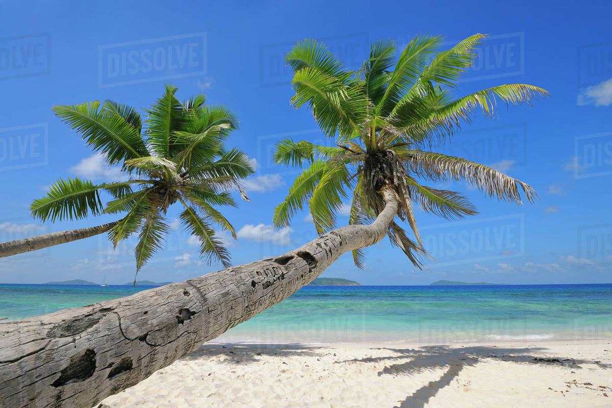 Palm Trees On Beach With Indian Ocean La Digue Seychelles