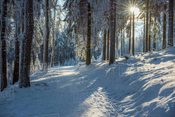 Snow Covered Winter Forest with Path and Sun, Grosser Feldberg, Frankfurt, Taunus, Hesse, Germany Royalty-free stock photo