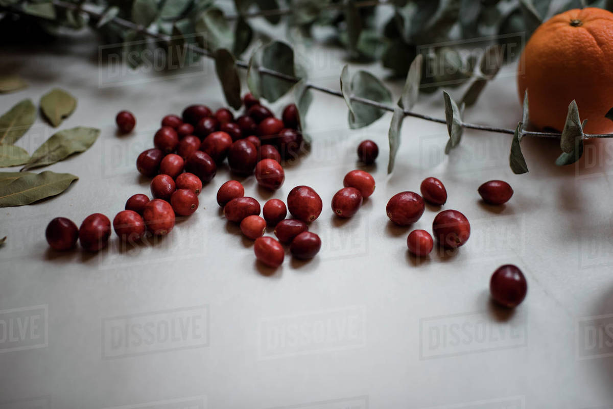 Oranges, cranberries and eucalyptus on a table Royalty-free stock photo