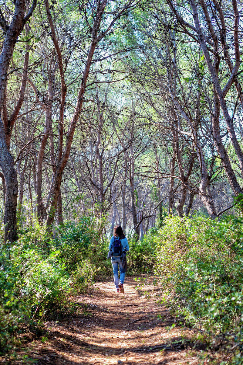 Rear view of woman walking in the forest on a sunny day Royalty-free stock photo