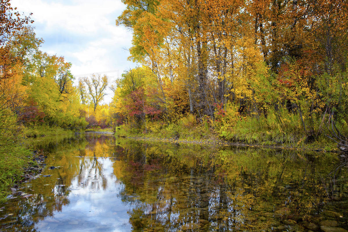 A creek surrounded by vibrant fall foliage in Jackson Hole, Wyoming Royalty-free stock photo