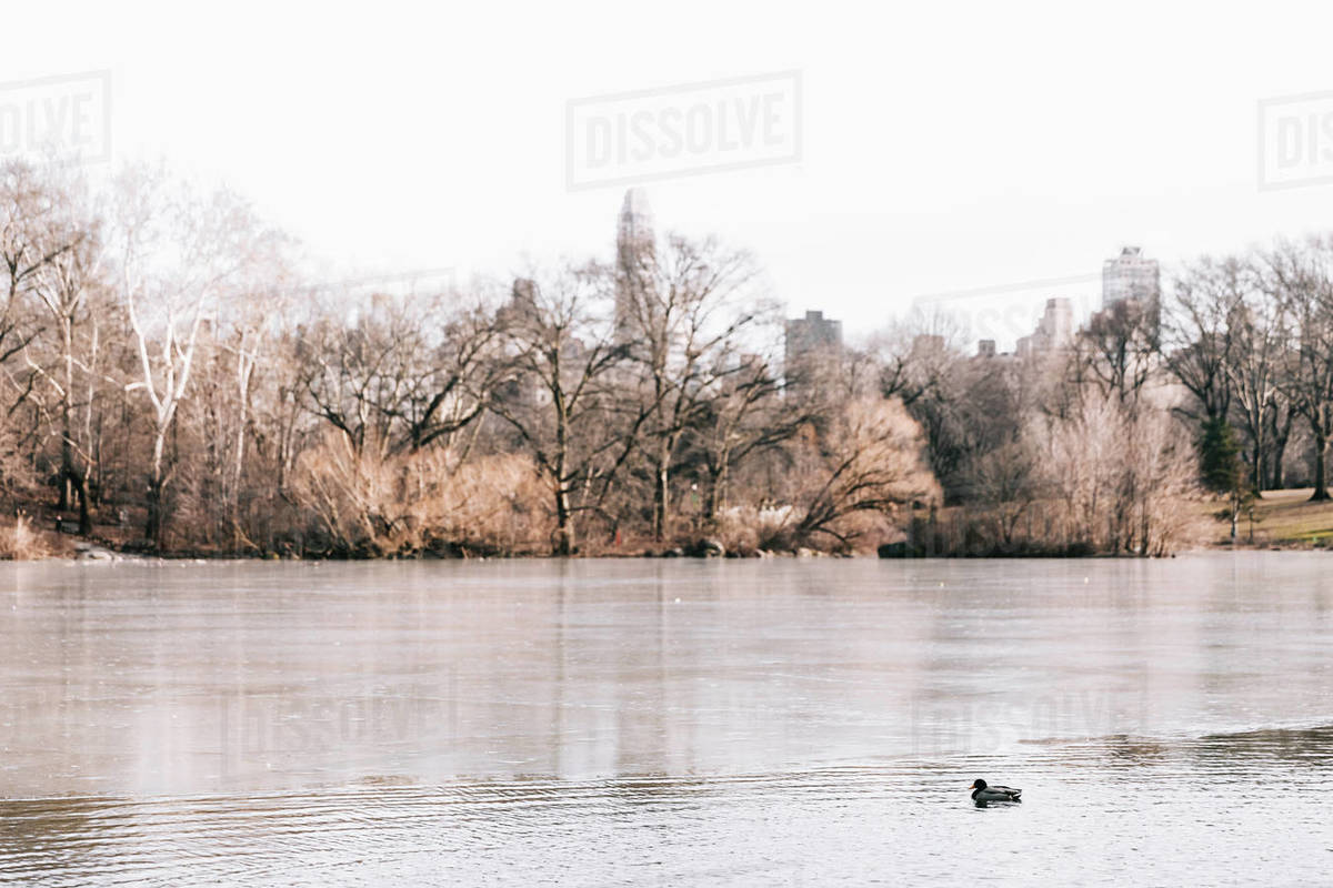Landscape, trees, ducks at river/lake during Autumn in Central Park, N Royalty-free stock photo
