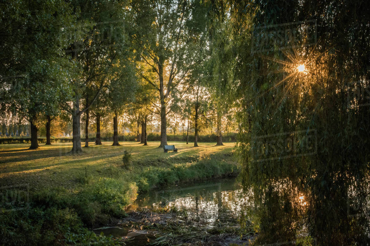 River image with sunburst and weeping willow trees in evening light Royalty-free stock photo