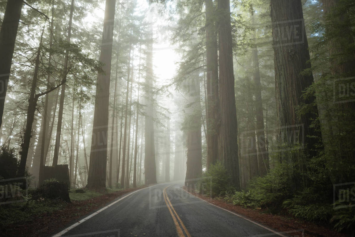 Avenue of the Giants Wide Royalty-free stock photo