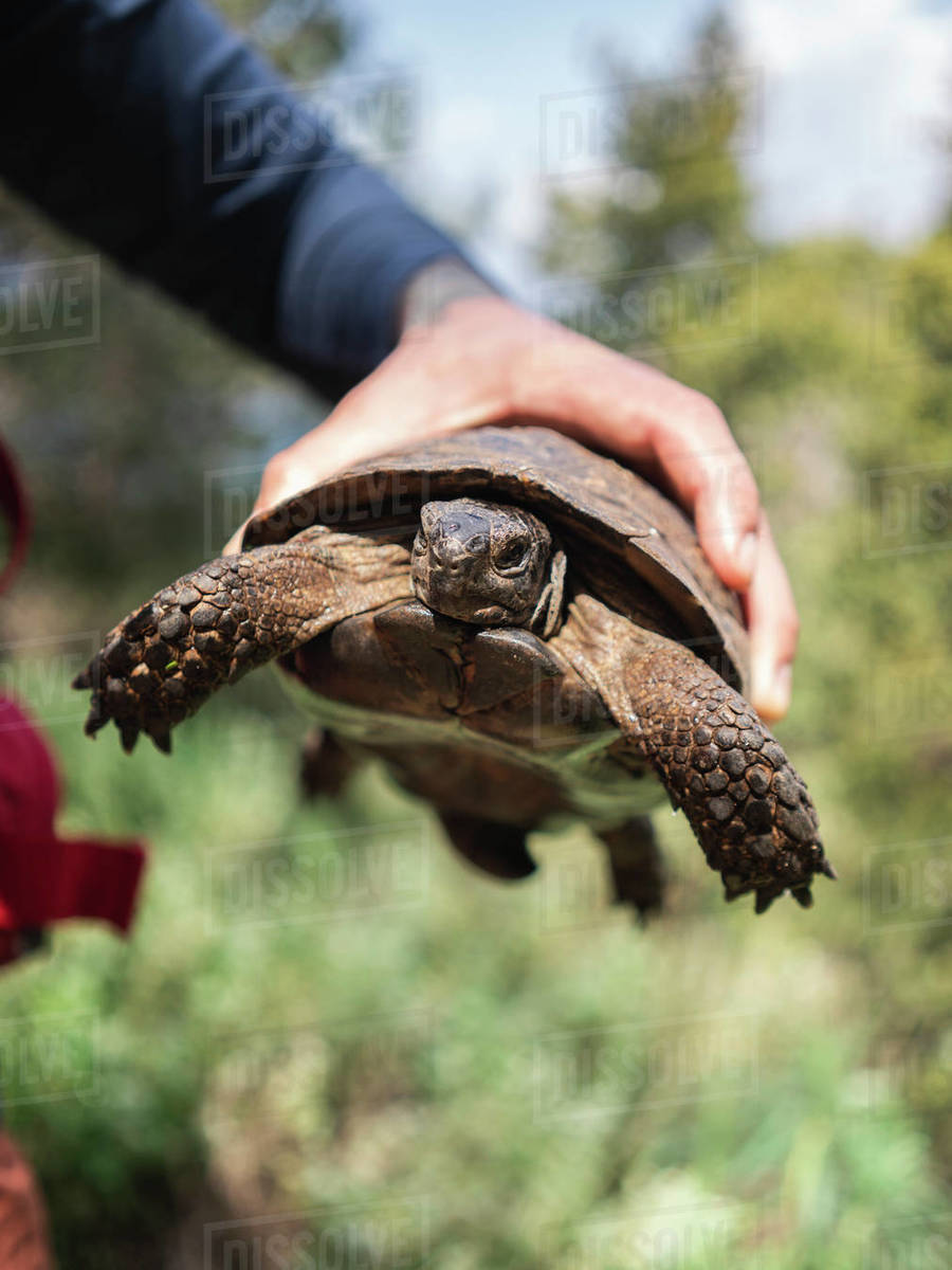 Close-up of man holding in hand turtle against trees during sunny day Royalty-free stock photo
