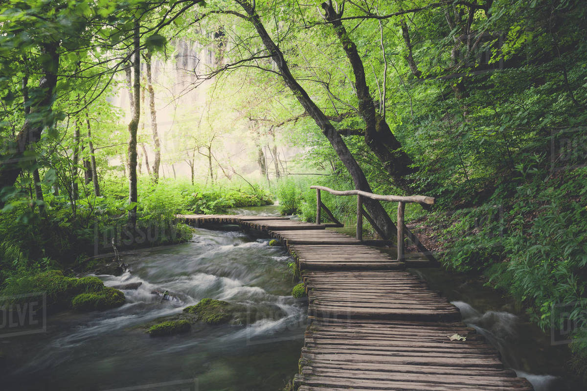 Wooden path across the river in green summer forest Royalty-free stock photo