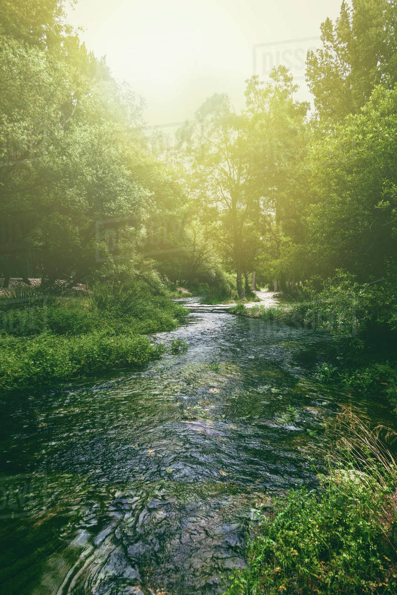 Flowing river between trees Royalty-free stock photo