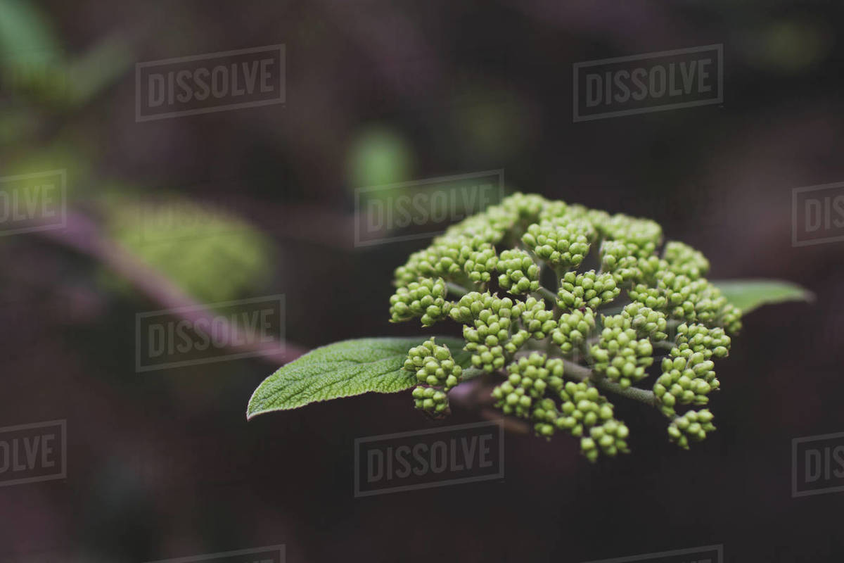 Flowers blooming in spring with green leaves Royalty-free stock photo