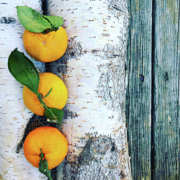 High angle view of oranges and tree trunks on table Royalty-free stock photo
