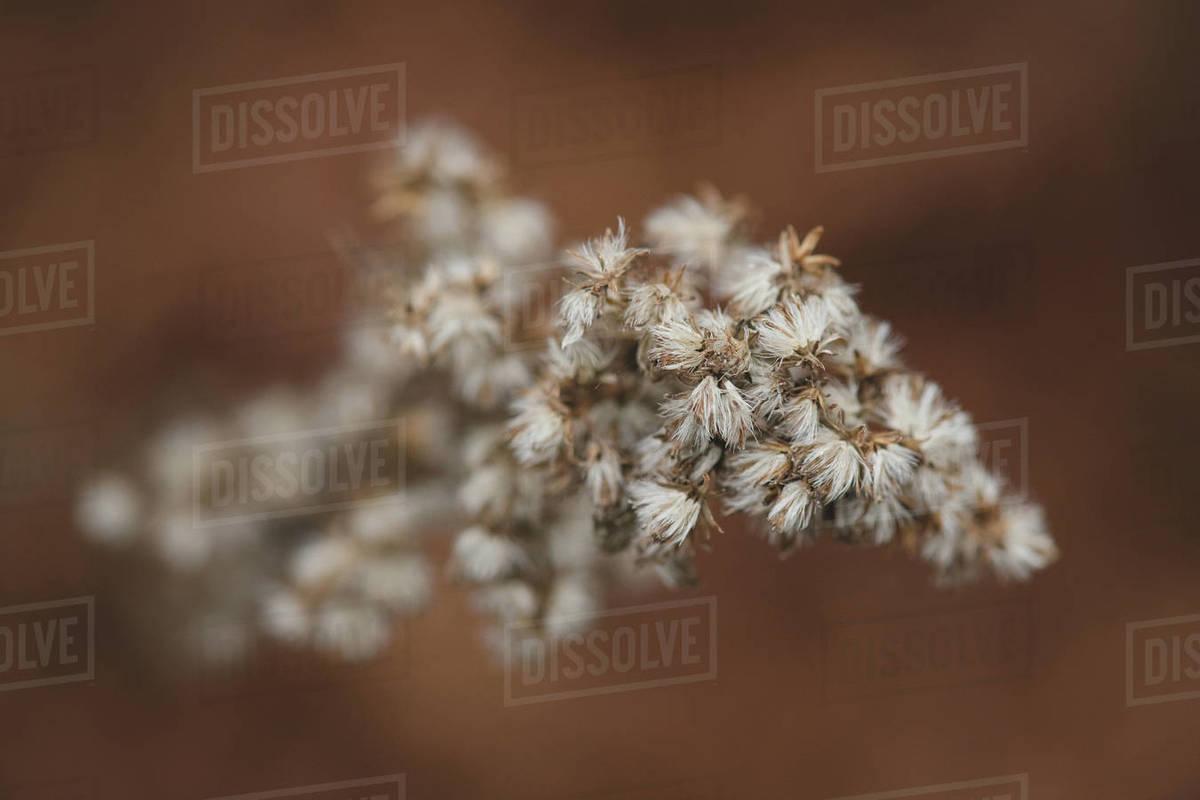 Macro Seedling Royalty-free stock photo