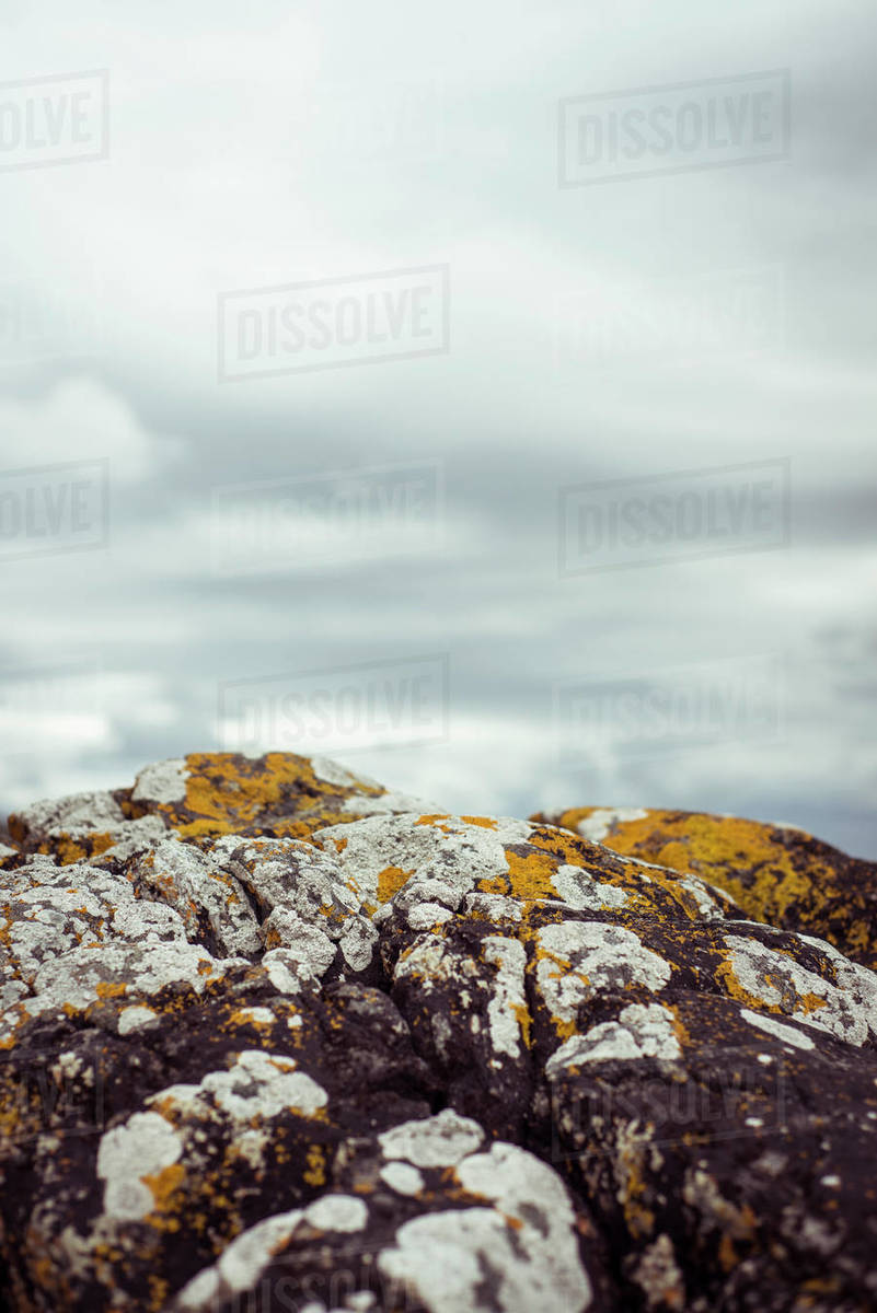 Close up of lycin and moss on rock in Scotland Royalty-free stock photo