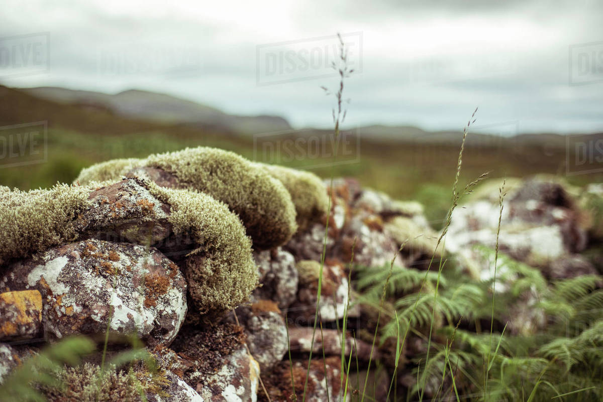 Moss covered rocks make old stone wall in Scotland Royalty-free stock photo