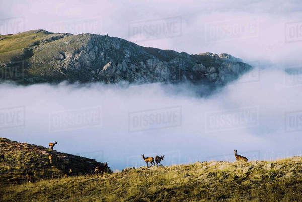 Animals on field by clouds covering mountains Royalty-free stock photo