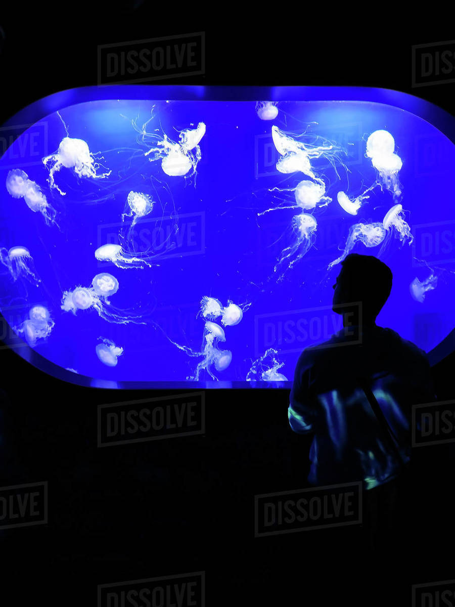 Boy looking at jellyfish through a glass in the aquarium Royalty-free stock photo