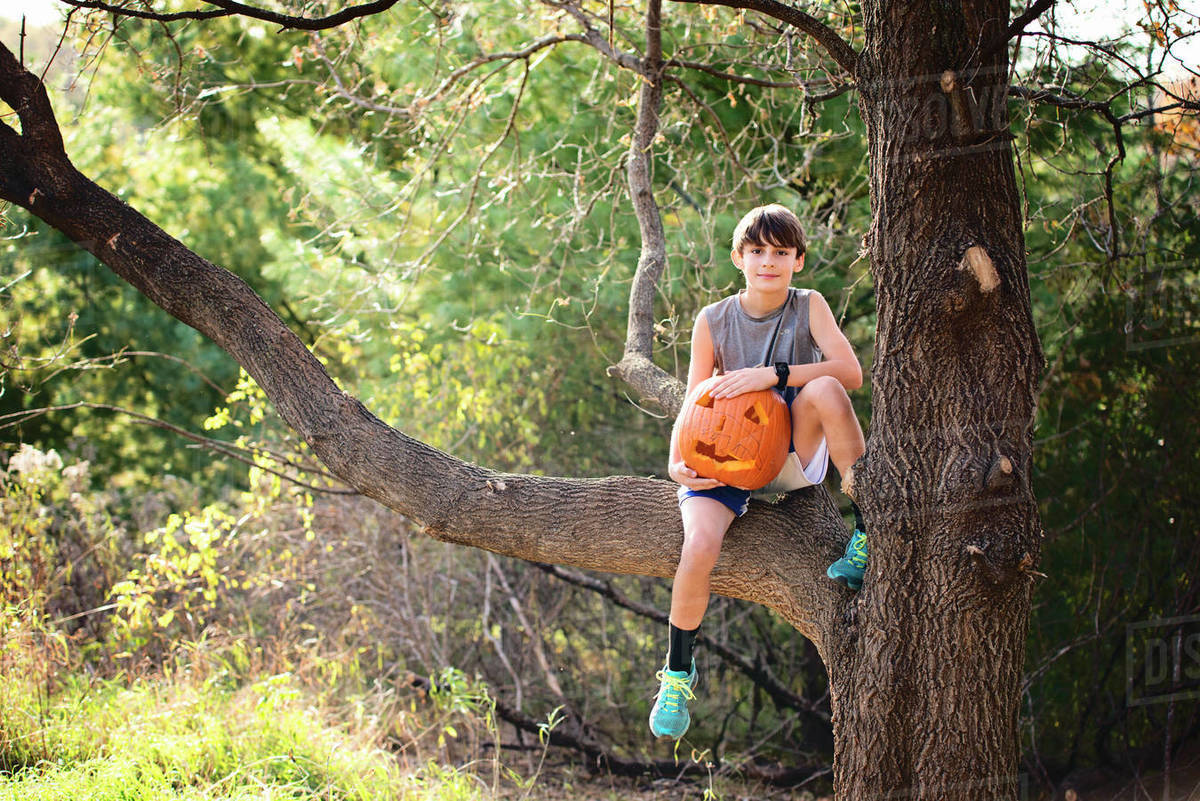 Young Boy Sitting in Tree With Carved Pumpkin Royalty-free stock photo