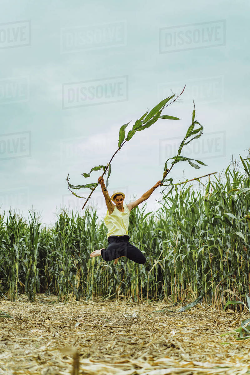 Farm man in a hat jumping in a green field holding up corn stalks. Royalty-free stock photo