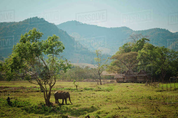 High angle view of elephant standing on grassy field by mountains against sky Royalty-free stock photo