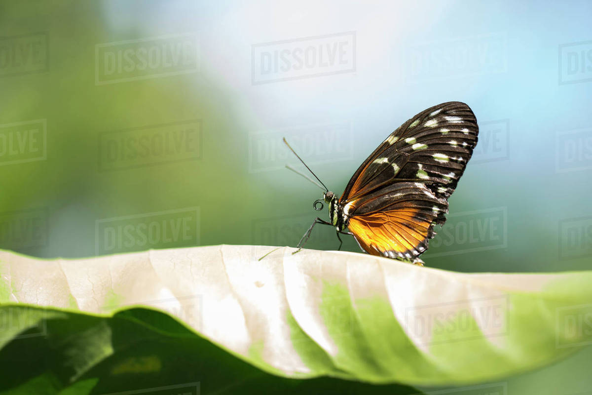 Close-up of butterfly on leaf stock photo