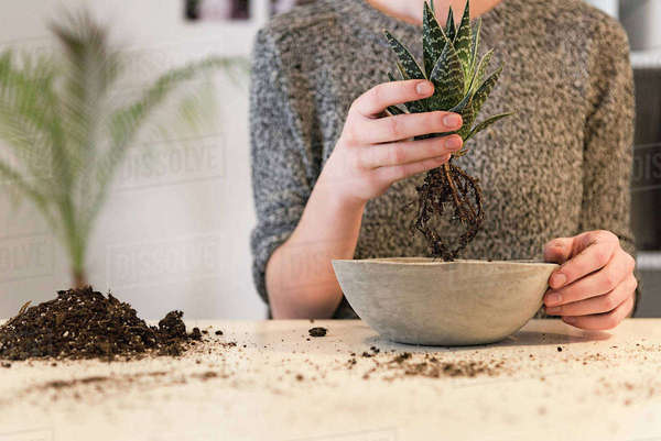 Midsection of businesswoman holding plant over concrete pot at desk in creative office Royalty-free stock photo