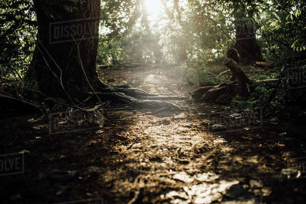 Tranquil view of sunlight in forest Royalty-free stock photo