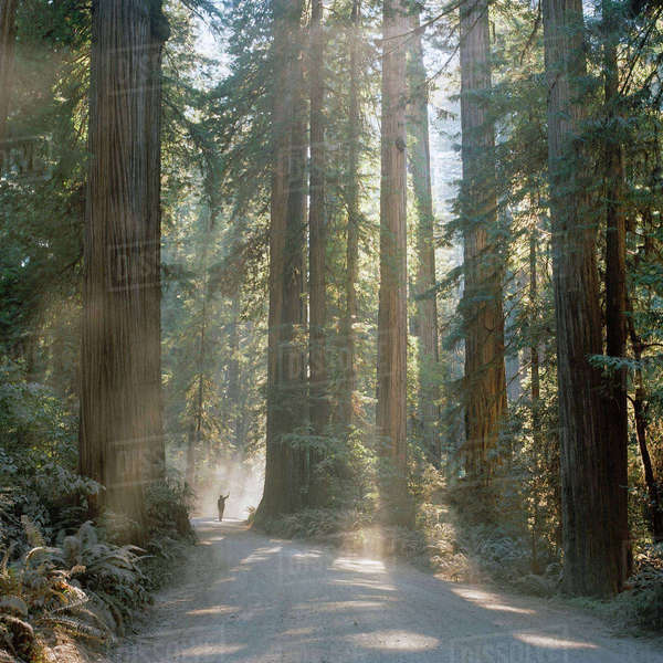 USA, California, Jedediah Smith Redwood State Park, Man on footpath in sequoia forest Royalty-free stock photo