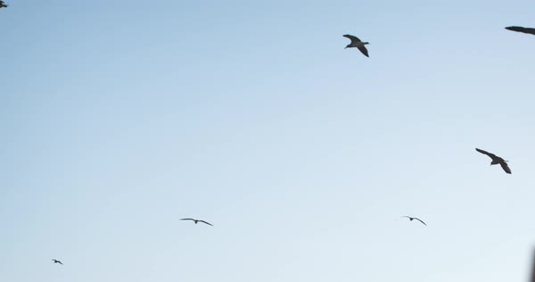 A shot of seagulls flying against a blue sky in and slow motion Royalty-free stock video