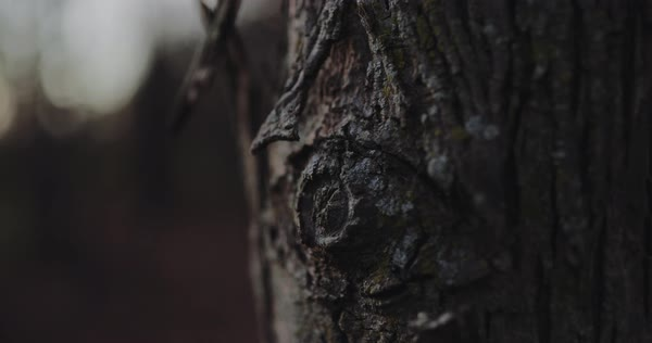 Hand-held shot of bark of a tree Royalty-free stock video
