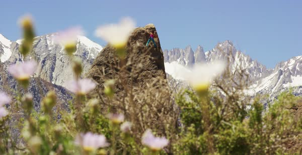 Static shot of a woman climbing a rock in Alabama Hills with flowers in foreground Royalty-free stock video